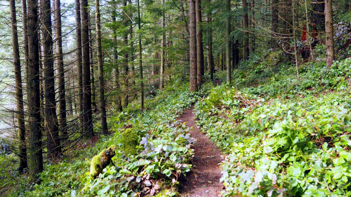 Save Blanchard Mountain Washington - Live Recklessly - Trails on Blanchard Mountain