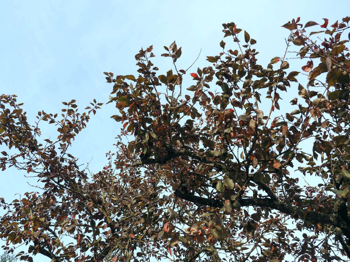 Fall Trees La Conner