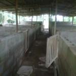 pig pen house