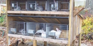 typical rabbit hutch