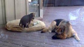 Γο κουτάβι αρνείται να παει για υπνο. Η αντίδραση της μαμάς cou; Απίστευτη!