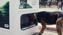 maquina-reciclaje-turquia-comida-perros-callejeros