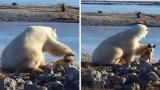 Πολική αρκούδα συναντά έναν σκύλο και δείτε την απίστευτη συμπεριφορά της
