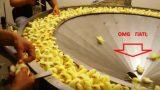 Πως μεταχειρίζονται τα μικρά κοτόπουλα στις βιομηχανίες φαγητού; ΔΕΙΤΕ το ΣΟΚΑΡΙΣΤΙΚΟ βίντεο…