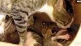 Γάτα υιοθέτησε έναν μικρό σκιουράκι και του έμαθε να «γουργουρίζει».