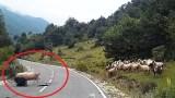 Πρόβατο επιτέθηκε στο βοσκό του… (Βίντεο)