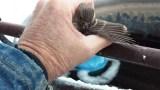 Ο αξιαγάπητος ηλικιωμένος που έσωσε ένα παγιδευμενο σπουργίτι με την ανάσα του