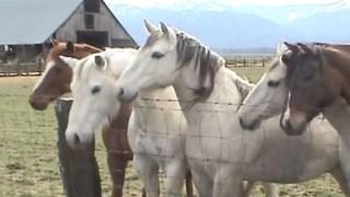 Τα άλογα κάθισαν το ένα δίπλα στο άλλο, μπροστά από τον φράχτη. Η συνέχεια θα σας συγκλονίσει! [Βίντεο]
