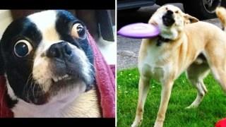 Ξεκαρδιστικά στιγμιότυπα από αποτυχημένες προσπάθειες σκύλων (Βίντεο)