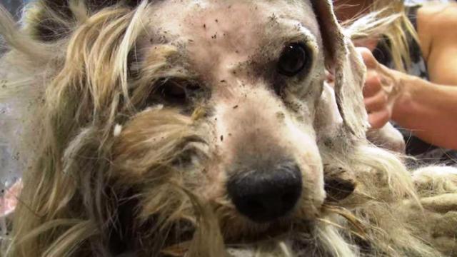 Αυτός ο σκύλος ποτέ δεν γνώρισε μια τρυφερή αγκαλιά. Προσέξτε το βλέμμα όμως τώρα τη στιγμή που δέχεται για πρώτη φορά την αγάπη (Βίντεο)