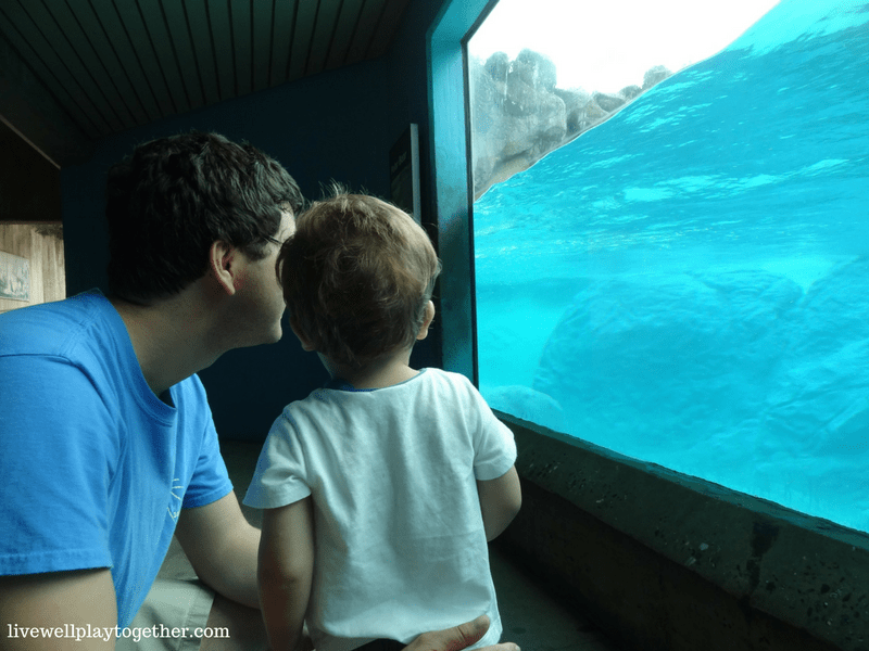 Visiting North Carolina? The NC Zoo makes a great day trip! Perfect for kids (of any age)! Don't miss these travel tips to make your trip a success!