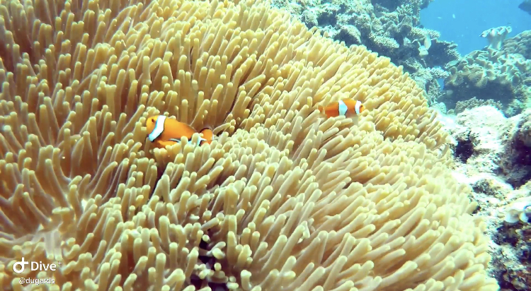 WATCH: Be a hostie & see the Barrier Reef for free