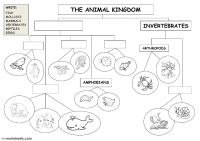 The animal kingdom - classification diagram: Animal ...