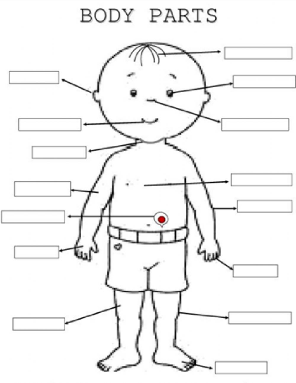 Body Parts: Parts of the body online worksheet
