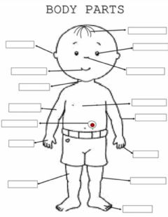The parts of the body Interactive worksheets