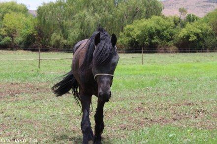 black-horse-brewery-3