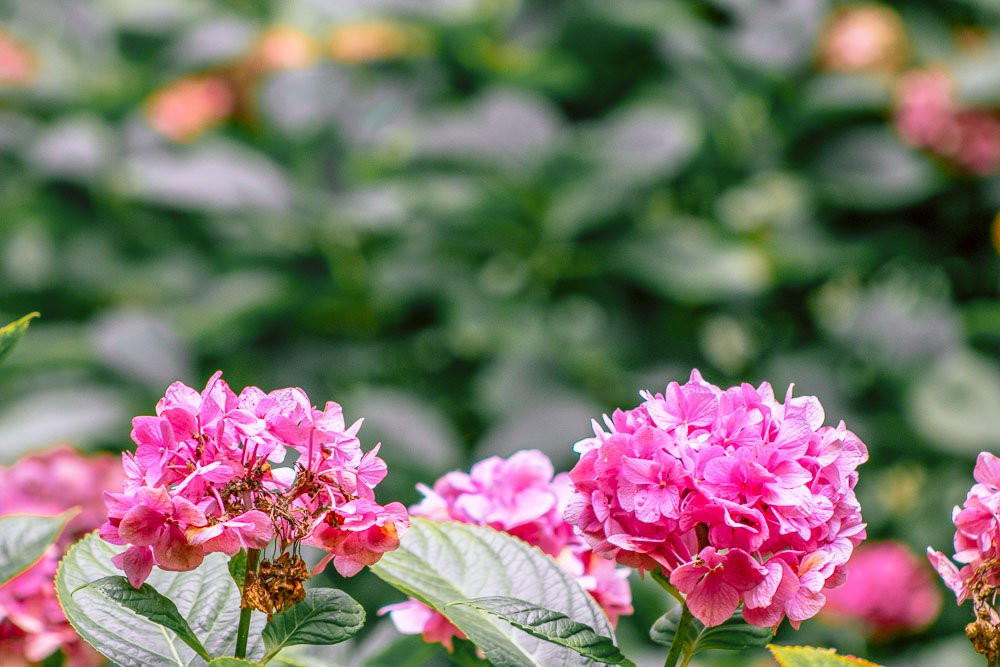 wellington-botanic-gardens-flower-2