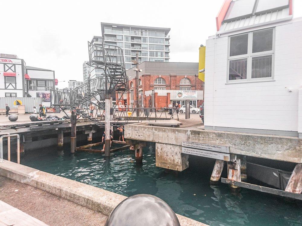 wellington-harbour