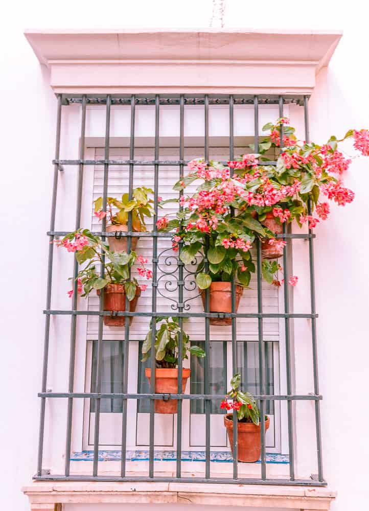 seville - barrio santo cruz flowers in windowsill