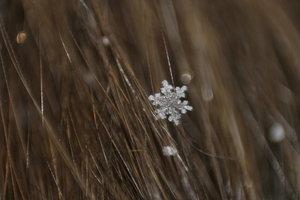Snowflake_in_hair_by_icecreamSTOCK