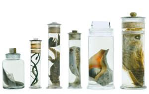 specimen-jars-nhm