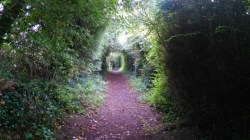 A verdant tunnel