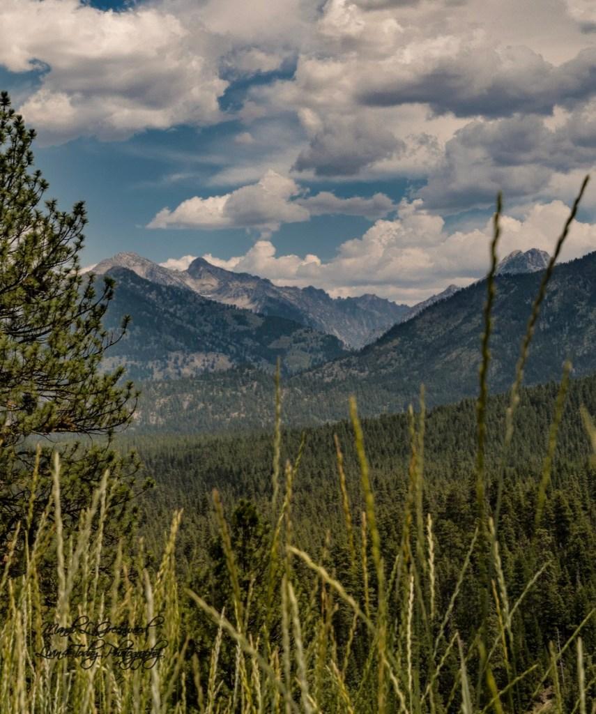 Ponderosa Pine Scenic Byway