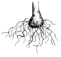 Roots excerpt from the book Identifying and Harvesting