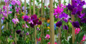 impact gardening