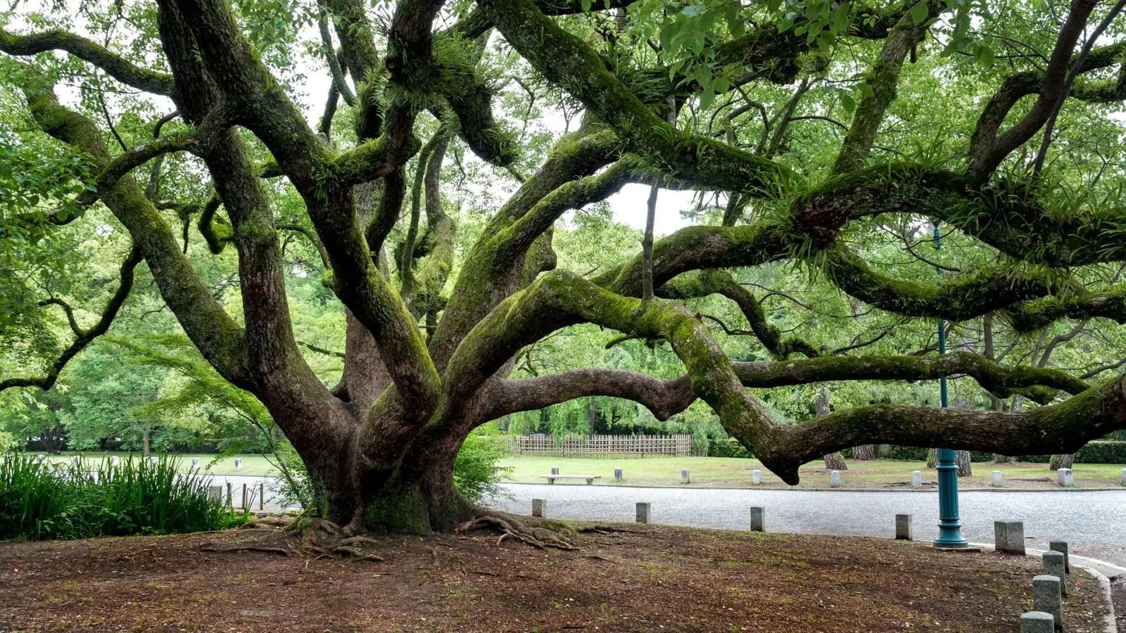 Read more about the article Alt wie ein Baum …