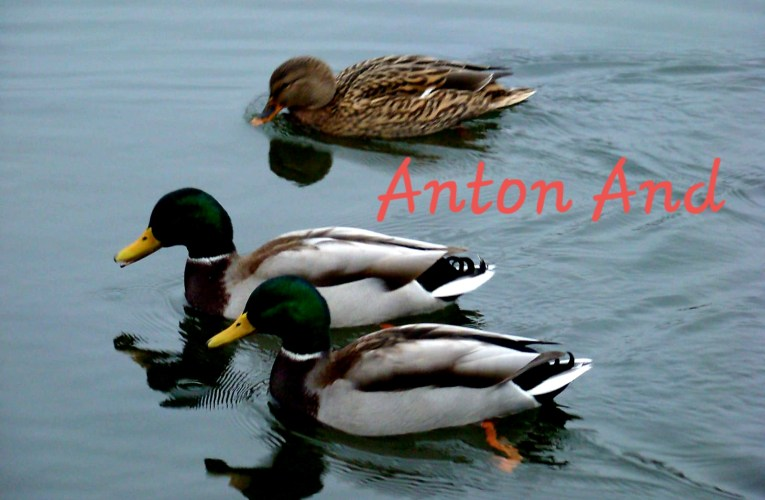 Anton And