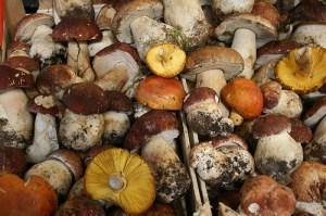 Mushroom (Fungo) (Boletus)