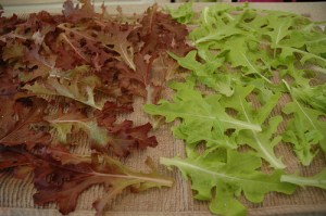 Loose-leaf lettuce by Joana Petrova