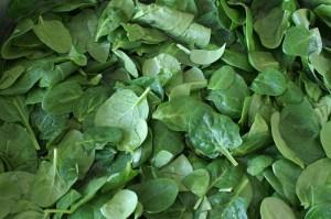 Spinach (Spinacio) (Spinacia oleracea)