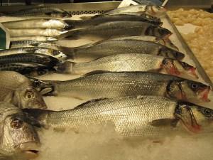 Sea bass / Sea perch (Branzino / Spigola / Pesce lupo) (Dicentrarchus labrax)