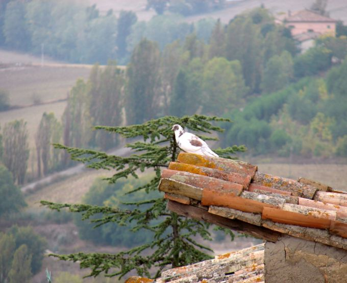 Bird over Montone by La Fattina