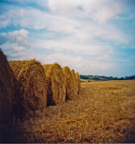 Hay by Miles Heller