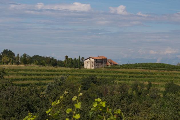 Rosazzo, Colli Orientali del Friuli