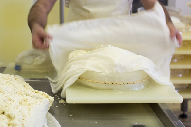 Wrapping the curd in cheesecloth