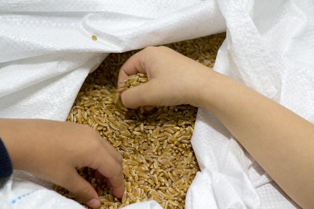 meimanrensheng.com sicilia-2451