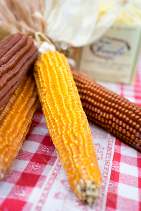 An ancient variety of corn with pointed kernels