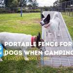 Portable Fence For Dogs When Camping Living Ambition