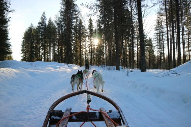 Husky-tocht Granö Beckasin