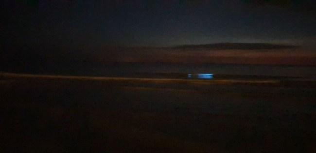 Zeevonk in Oostende