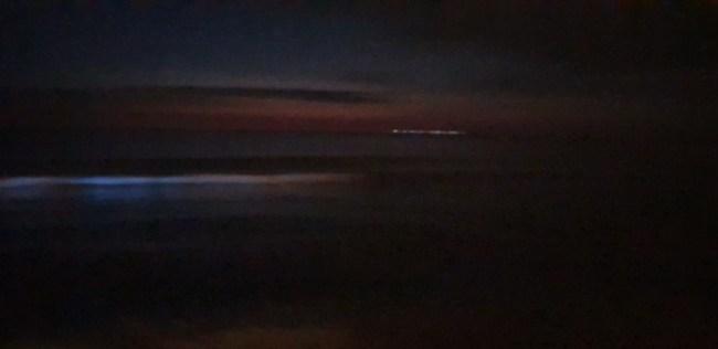 Zeevonk aan de Belgische kust