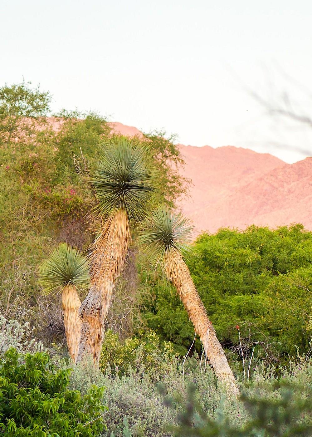 gardens the living desert