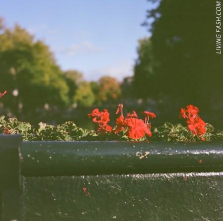 flowers8440NEG0004