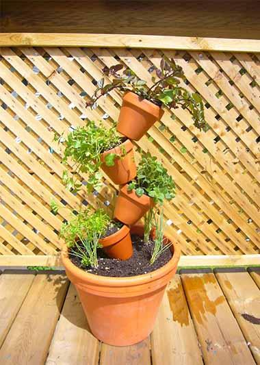 Crooked Pot Garden