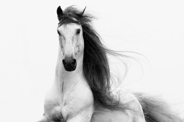 Wild Horse Fine Art Photography