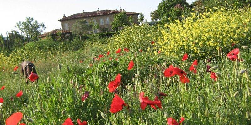 Gardening in Italy © Jonathan Radford